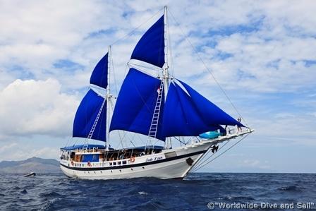 Safariboot Indo Siren