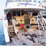 Tauchdeck Safarischiff MY Longimanus