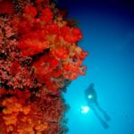 Korallen Tauchschiff Adelaar