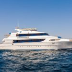 Safariboot Golden Dolphin 3