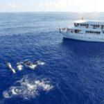 Delphin-Begleitung Tauchboot MV Keana