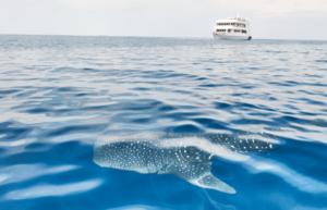 Walhai Safarischiff MV Keana
