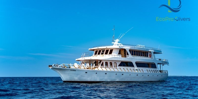 Seitansicht Safariboot Eco Blue Shark One