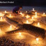 Walhai bei Nacht
